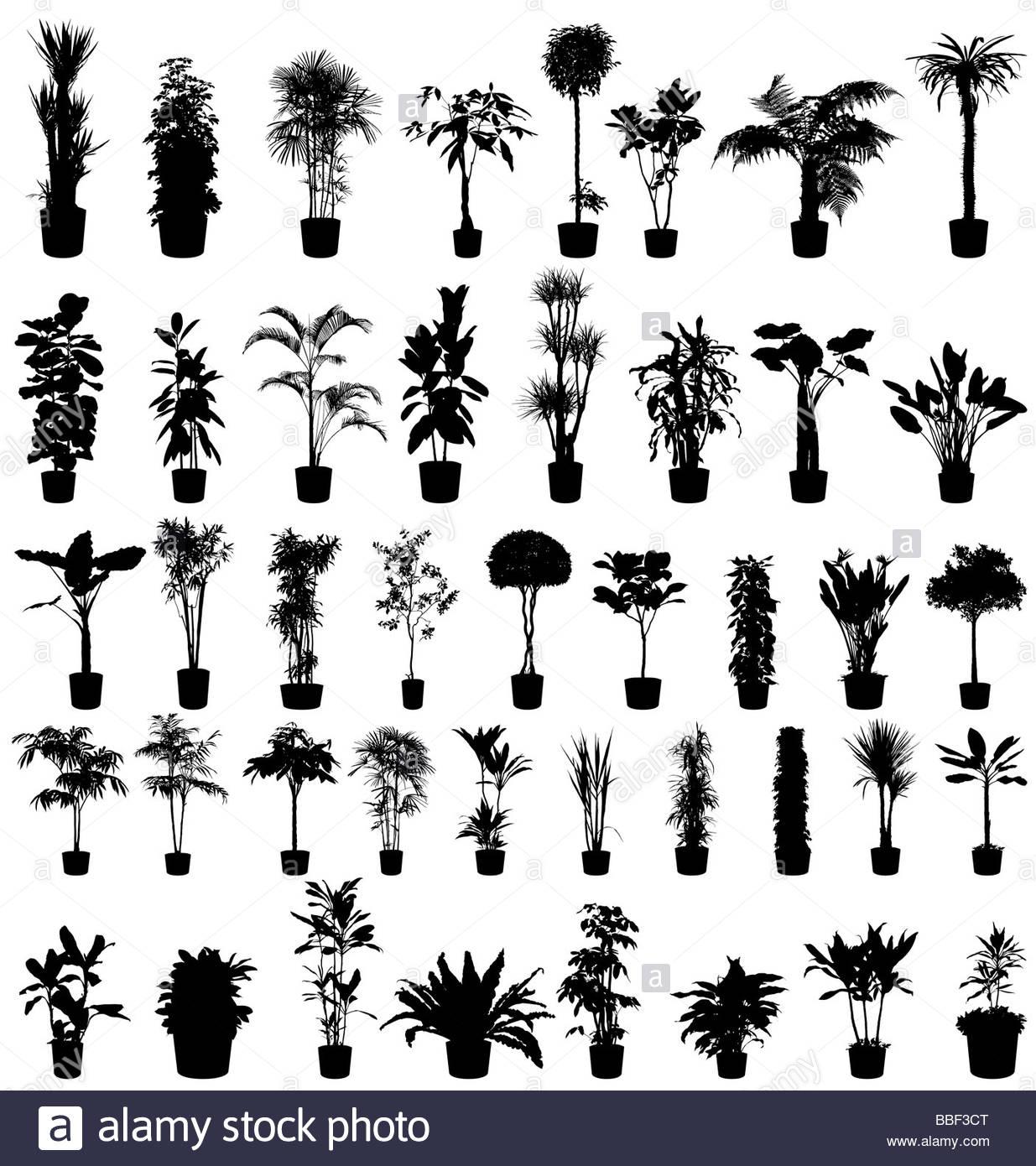große Bäume und Pflanzen-Silhouetten-Sammlung Stockbild