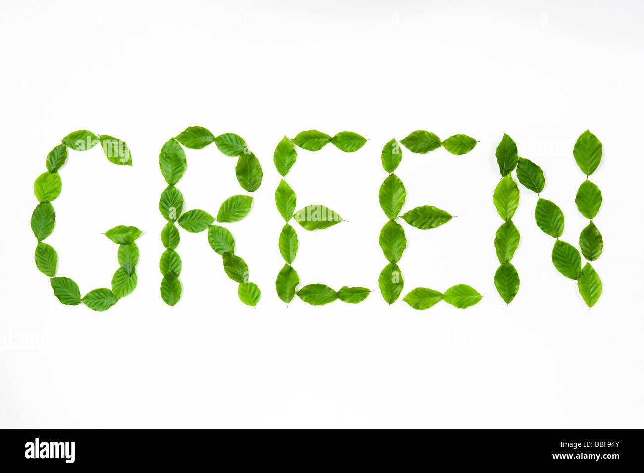 """Wort """"grün"""" dargelegt mit Blättern. Buche-Blätter. Stockbild"""