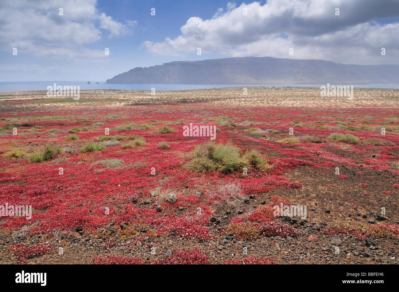 Bereich der roten Rasen auf Graciosa Insel Canarias Stockbild