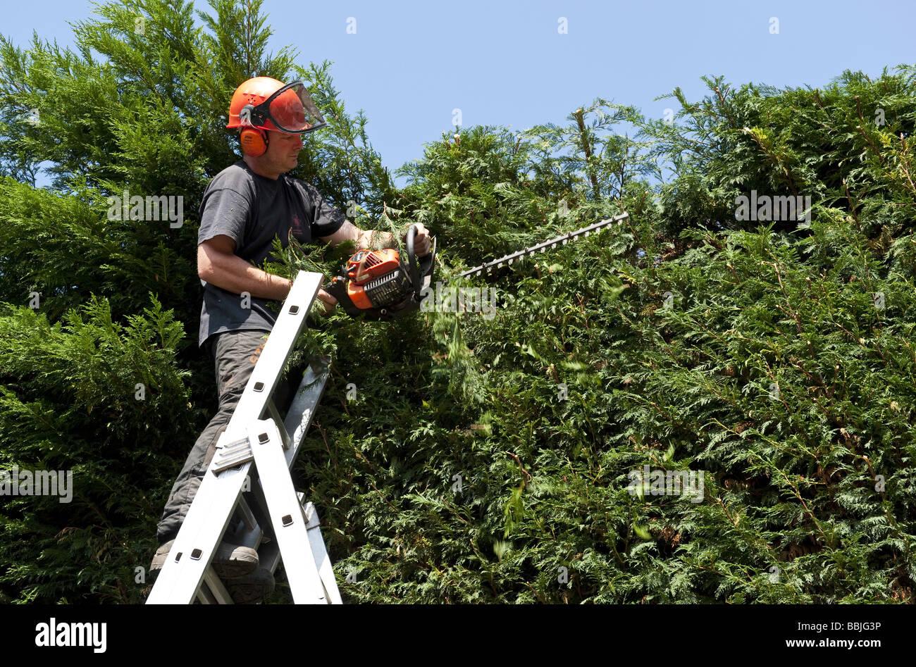 helm tragen baumpfleger schneiden eine große garten koniferen