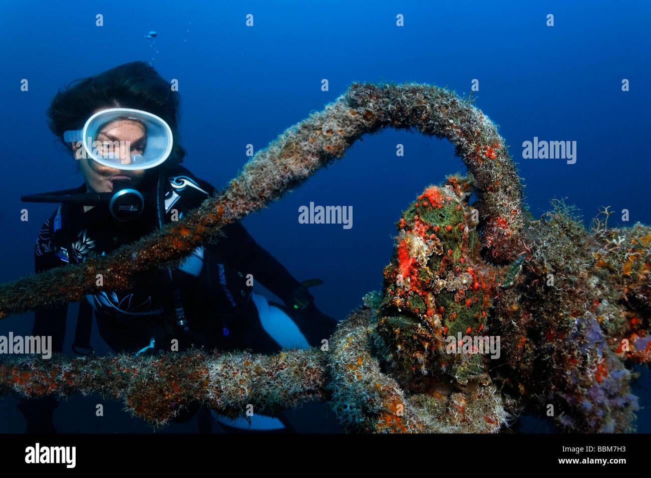Taucher Uhren Riesen Anglerfisch (Antennarius Commersonii) mit perfekten Tarnung, sitzen auf dickes Seil, Gangga Stockbild