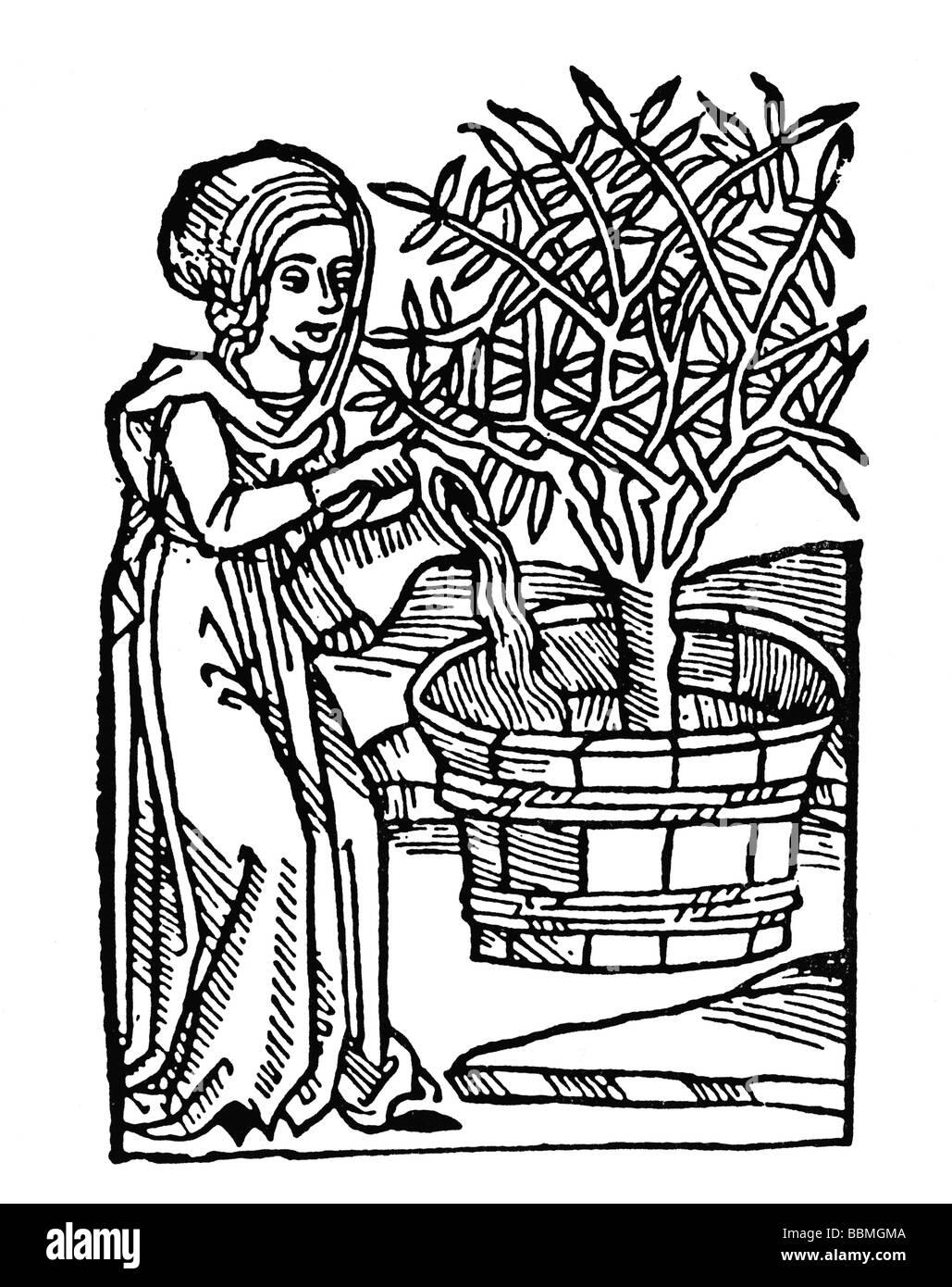 Frau, Bewässerung von einem Baum in einem Holzeimer, Holz schnitzen aus dem Mittelalter Stockfoto