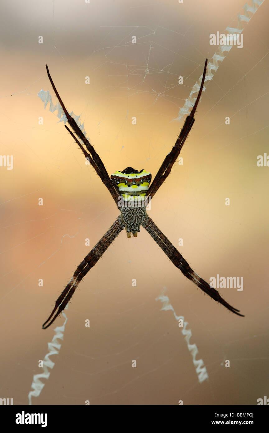 Signatur-Spider Stockbild