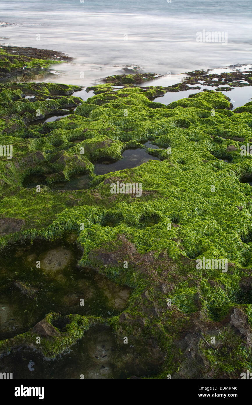Slippery rocks stockfotos slippery rocks bilder alamy for Grune algen
