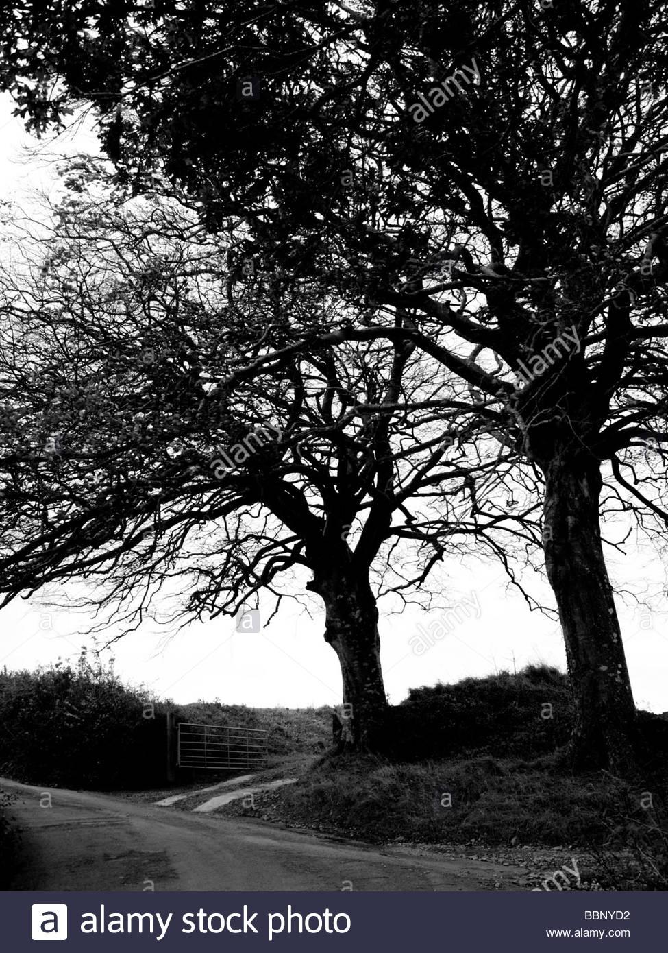 Silouhetted Bäume auf der dunklen Landstraße in Devon UK Stockbild