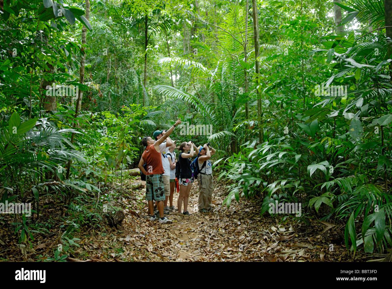 Tierbeobachtungen in den Regenwald, Costa Rica, Ökotourismus mit einem lokalen Naturführer Stockbild
