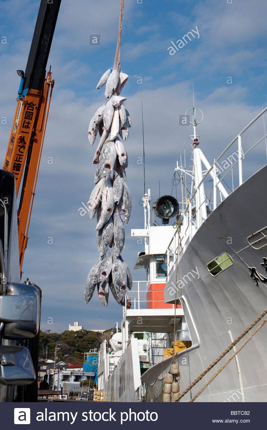tief gefrorenen Thunfisch aus dem gekühlten Schiff entladen wird Stockbild
