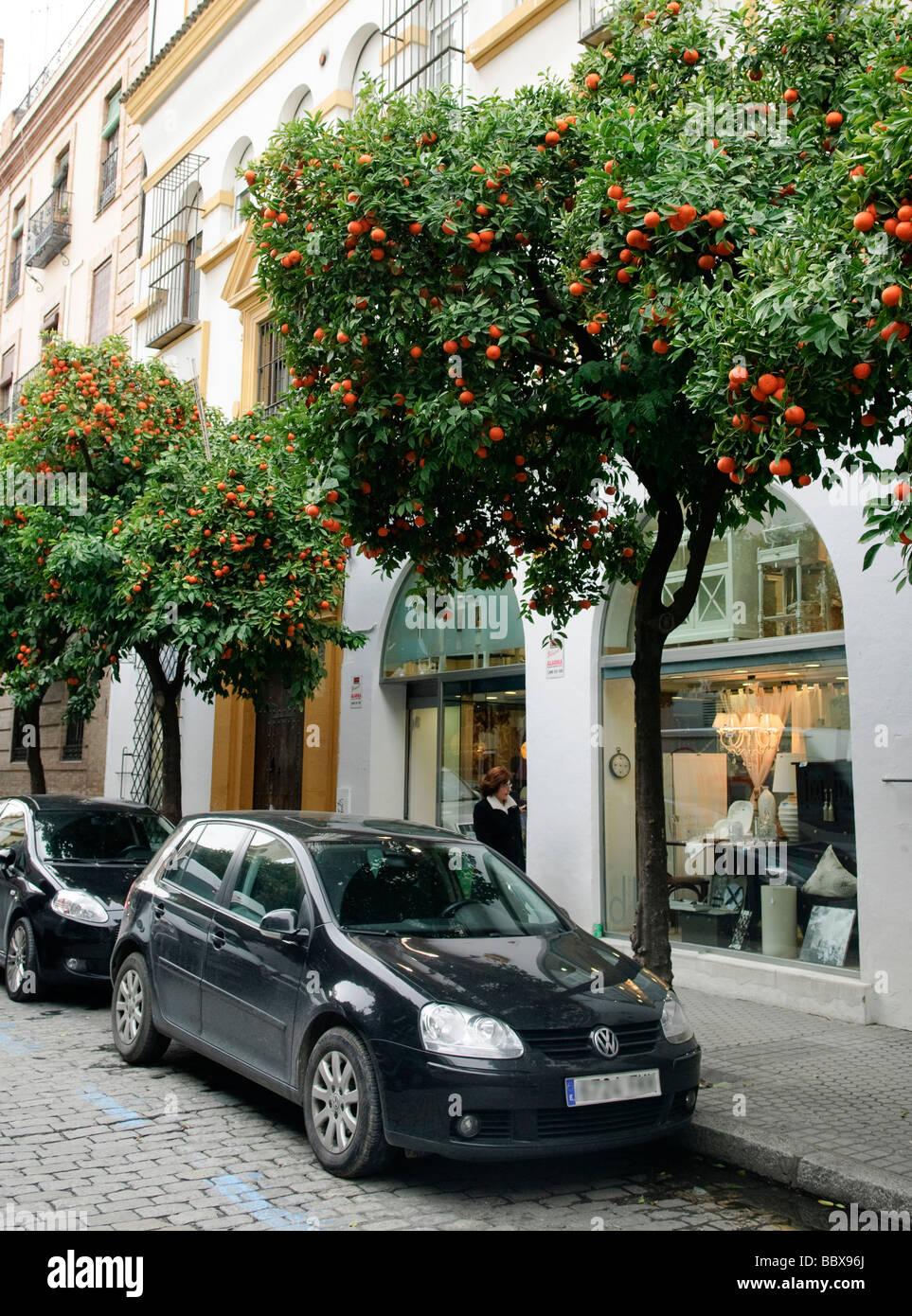 Innenstadt Einkaufsstraße gesäumt von Mandarinen Bäume in Sevilla, Spanien Stockbild