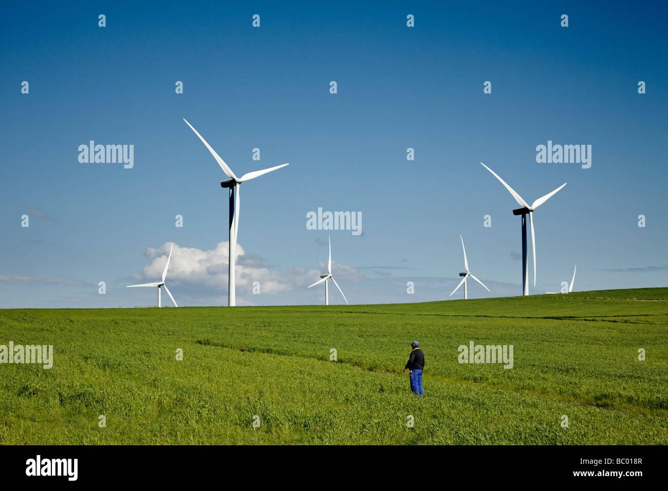Felder von Getreide und Wind macht Mühlen in Tarifa Cadiz Andalusien Spanien Stockbild