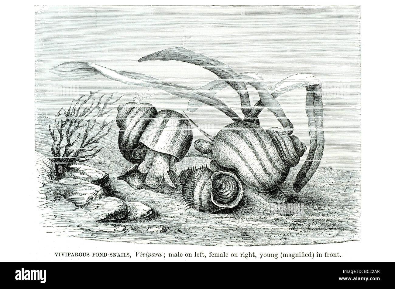 Ausgezeichnet Männlich Reproduktion Fotos - Anatomie Ideen - finotti ...