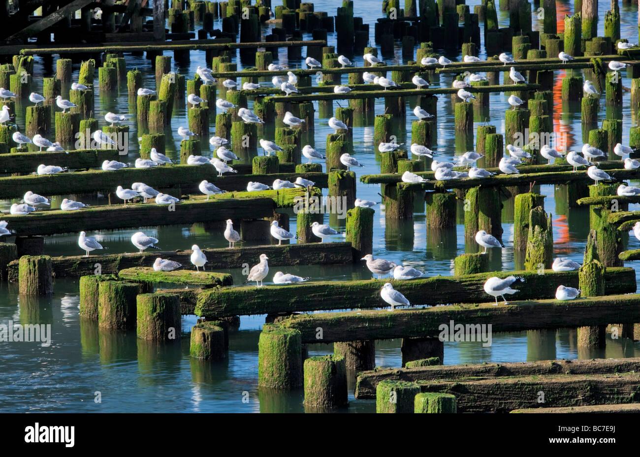 Möwen auf Altbau strukturieren Astoria Oregon Stockbild
