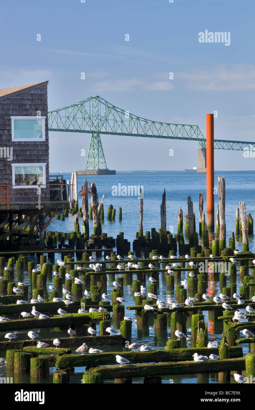 Möwen auf alte Bausubstanz mit Astoria Brücke Astoria Oregon Stockbild
