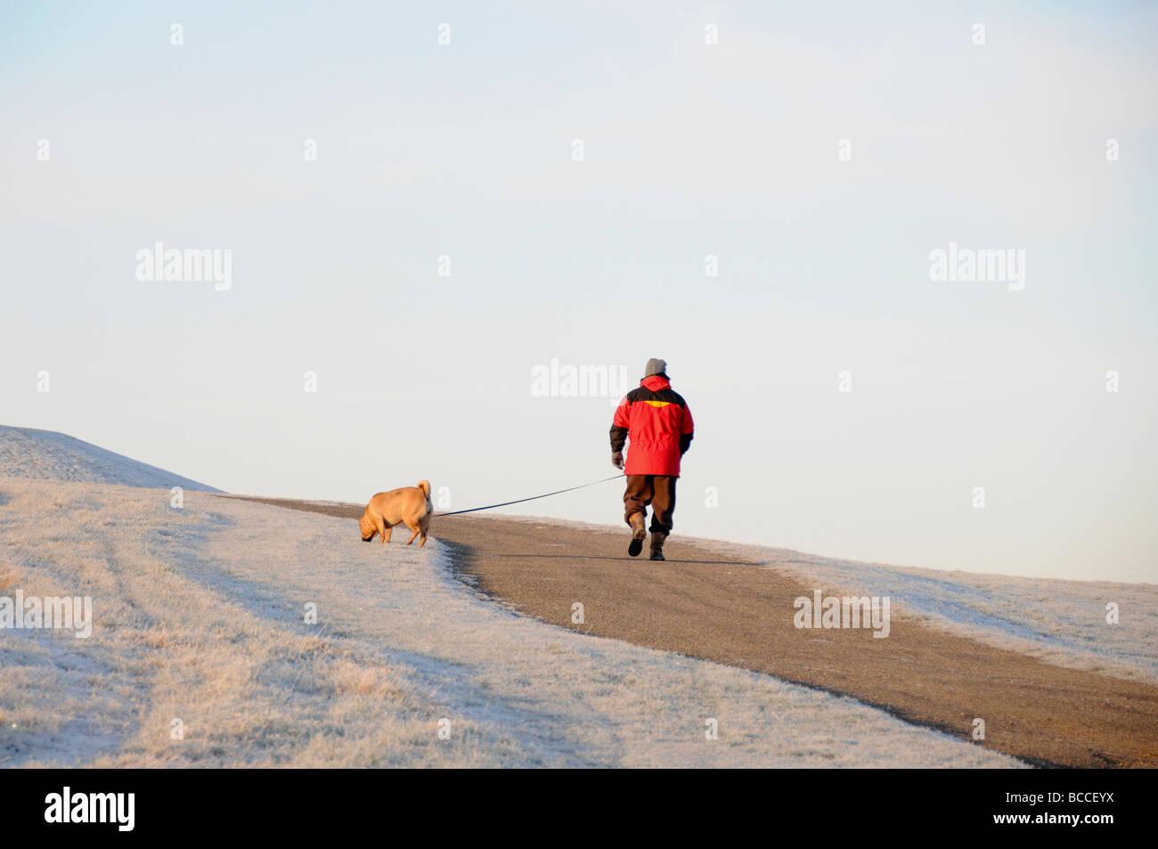 Dogwalker, Frost-Szene im Winter, England Stockbild