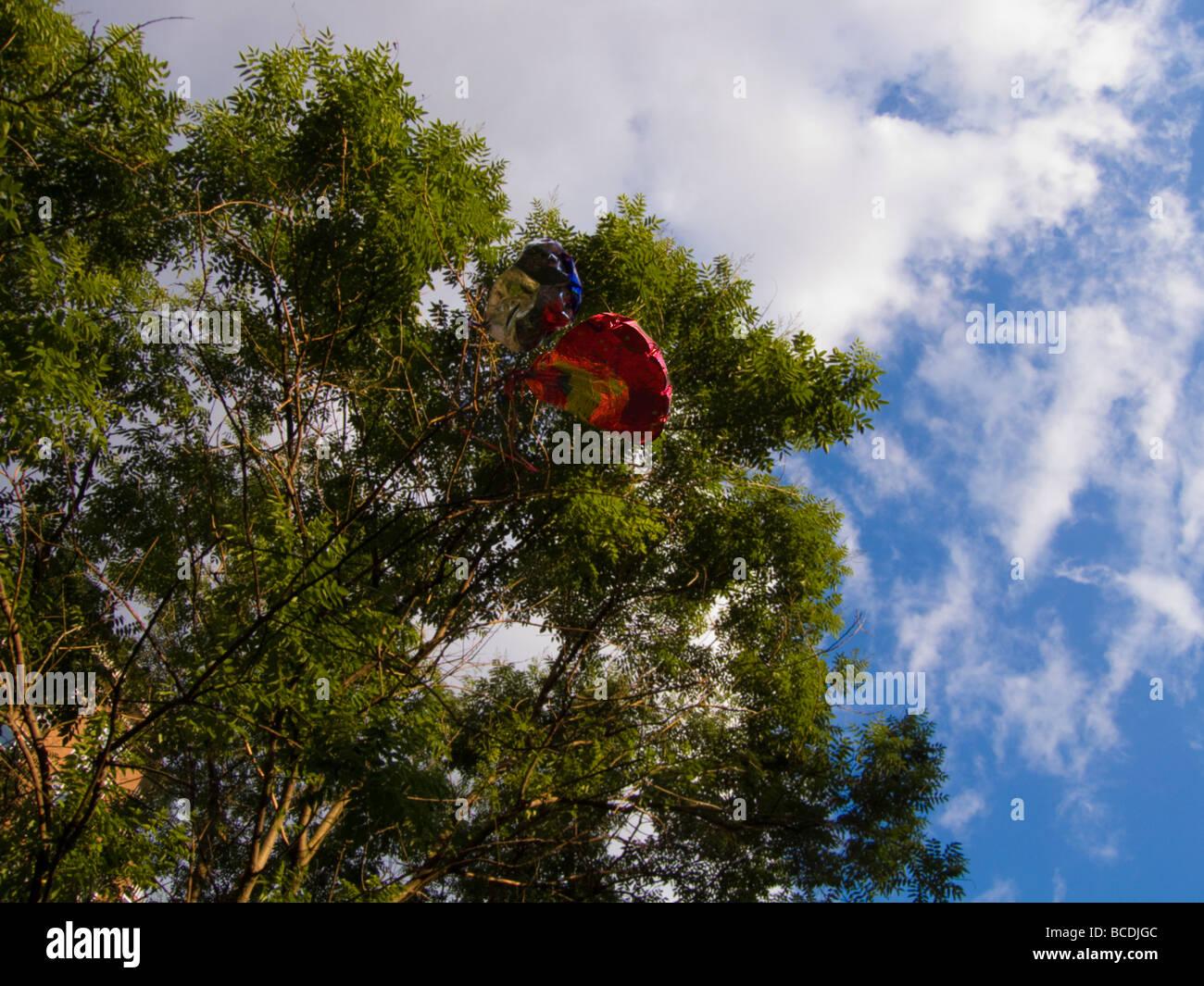 Happy Birthday Ballons Gefangen In Einem Baum New York Auf Samstag 27 Juni