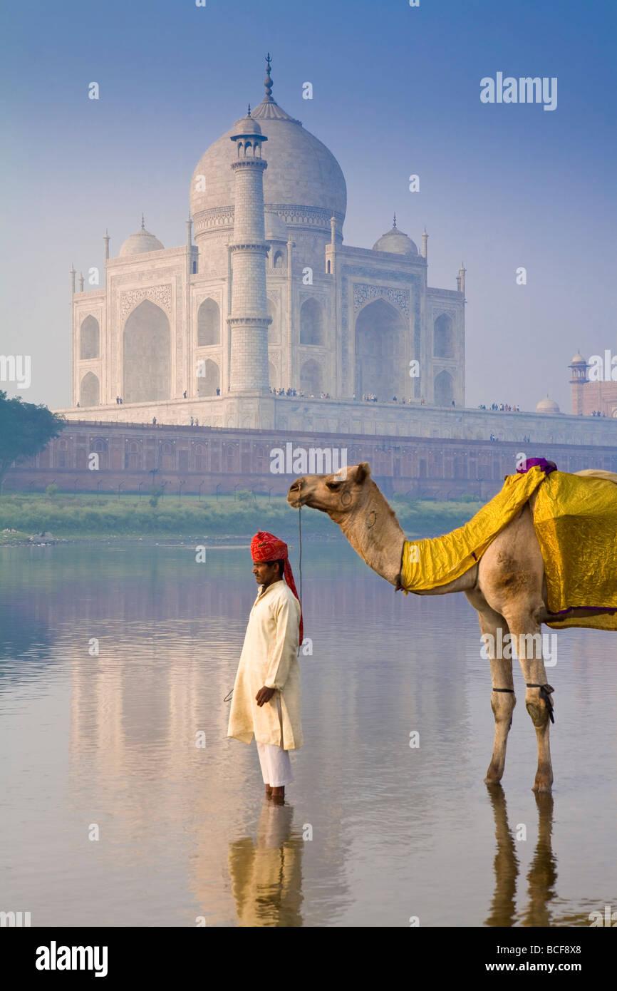 Camal & Fahrer, Taj Mahal, Agra, Uttar Pradesh, Indien, Herr Stockbild