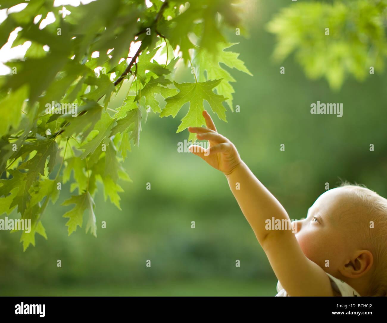 Baby-jungen erreichen für Blätter an einem Baum Stockfoto