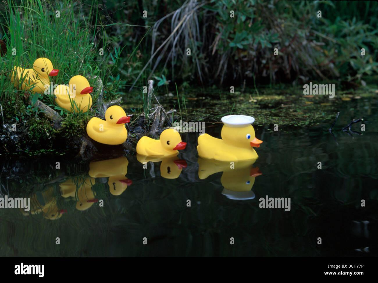 Gummienten in einer Zeile Teich Yunan Alaska Stockfoto