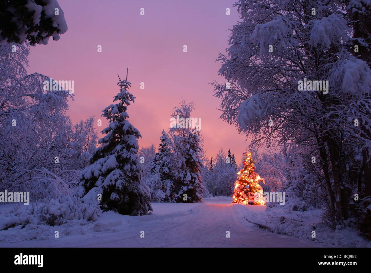 beleuchtete weihnachtsbaum in der nacht in der n he von. Black Bedroom Furniture Sets. Home Design Ideas