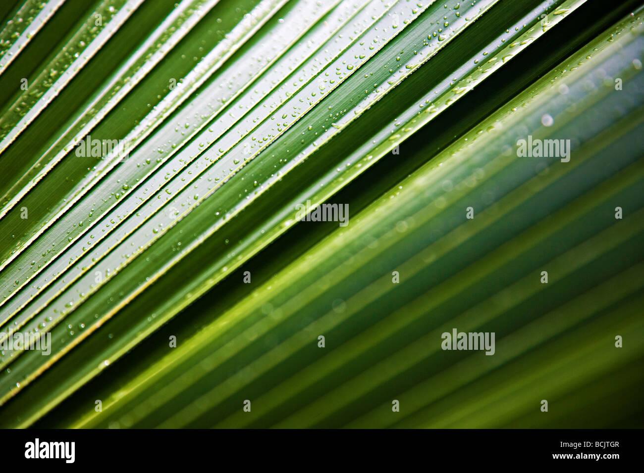Wassertropfen auf einem Wedel Stockbild