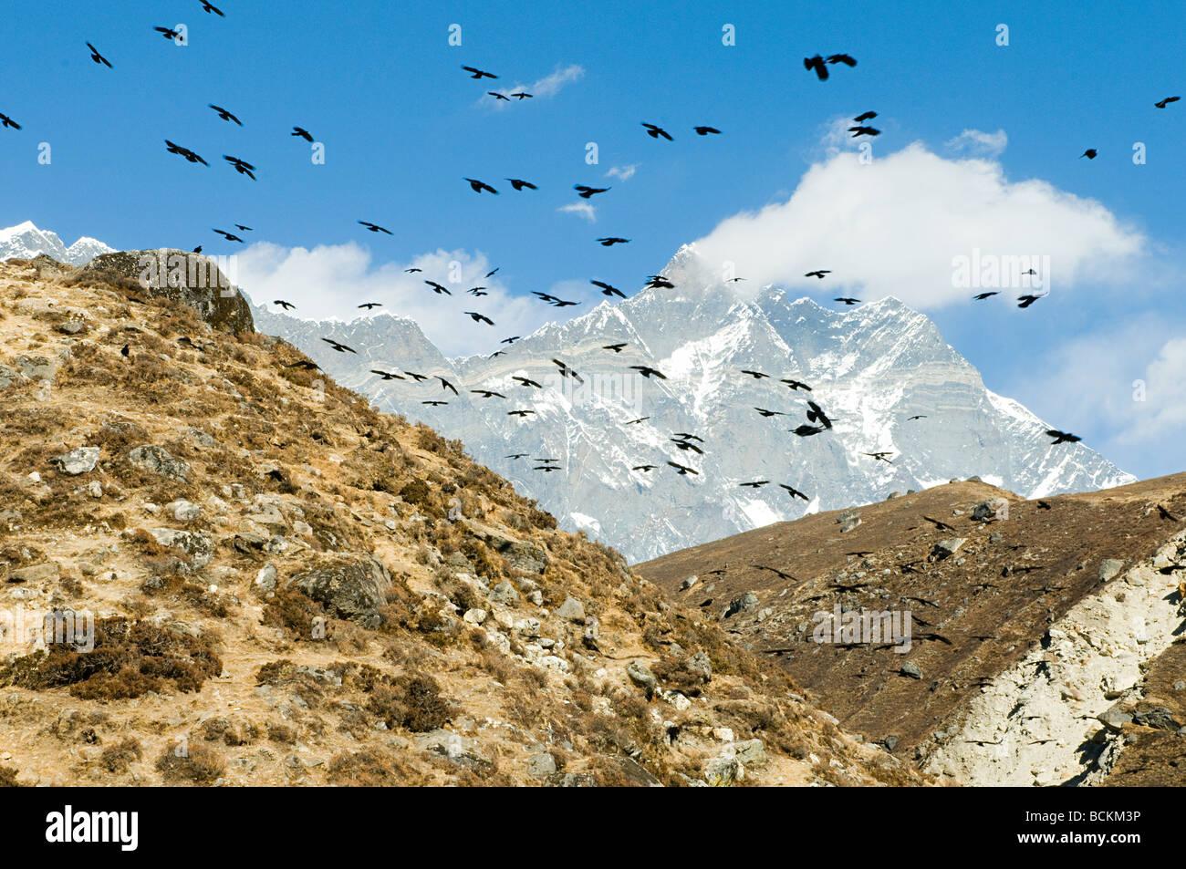 Krähen über Himalaya Stockbild