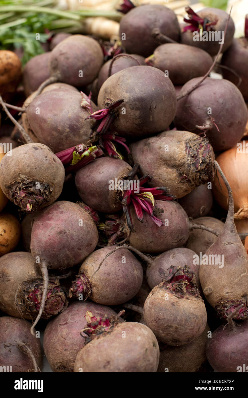 Natürlich verkauft angebautes Gemüse auf dem Markt rote Beete Stockbild