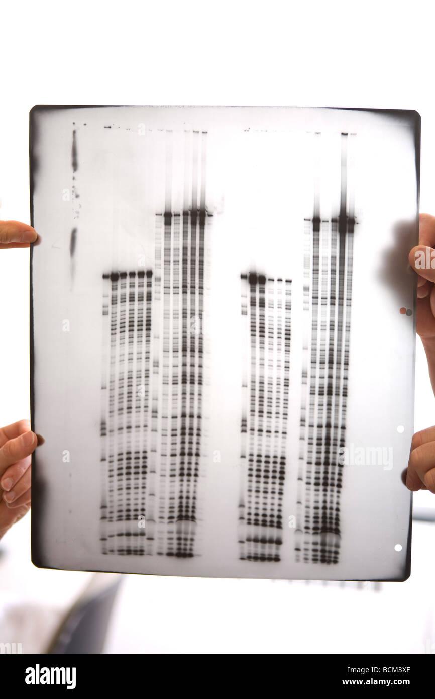 Wissenschaftliche Daten auf transparenter Folie Stockfoto