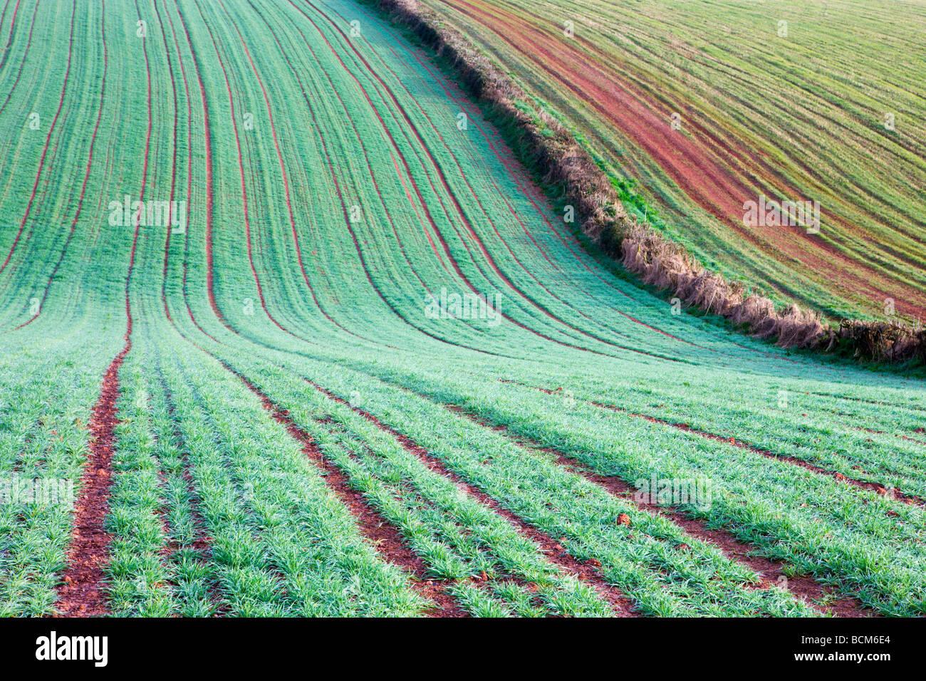 Soil frost stockfotos soil frost bilder alamy - Gartenarbeit im marz ...