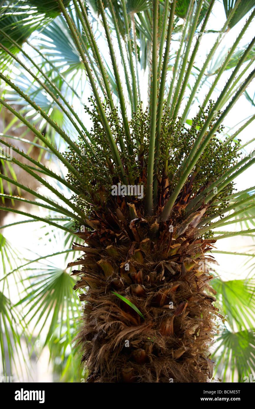 Palmen- Stockbild