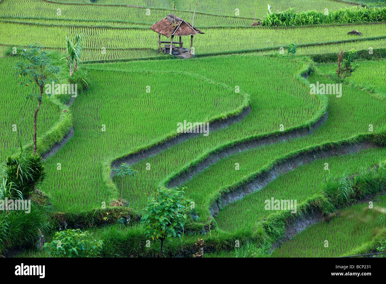 die terrassenförmig angelegten Reis Felder, in der Nähe von Tirtagangga, Bali, Indonesien Stockbild