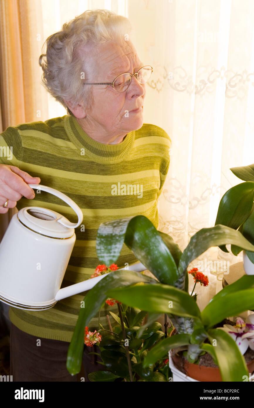 Frau in Ihren Siebzigern Steht Im Wohnzimmer Und Gießt Ihre Pflanzen Stockbild