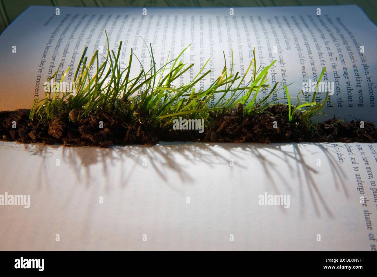 Grass sprießen aus inneren des Buches Stockbild
