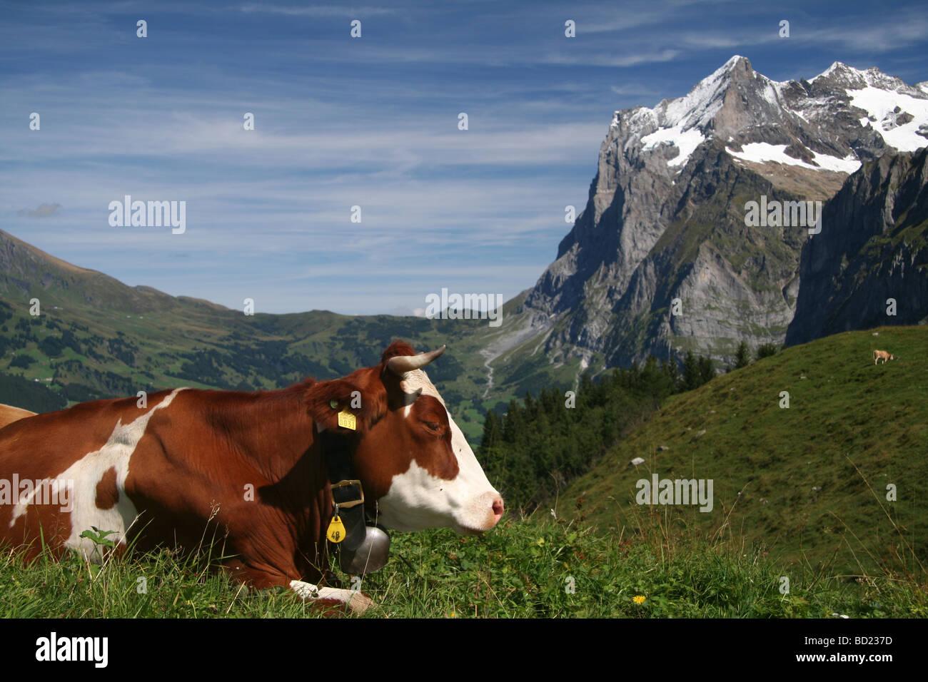 Schweizer Alm Stockbild