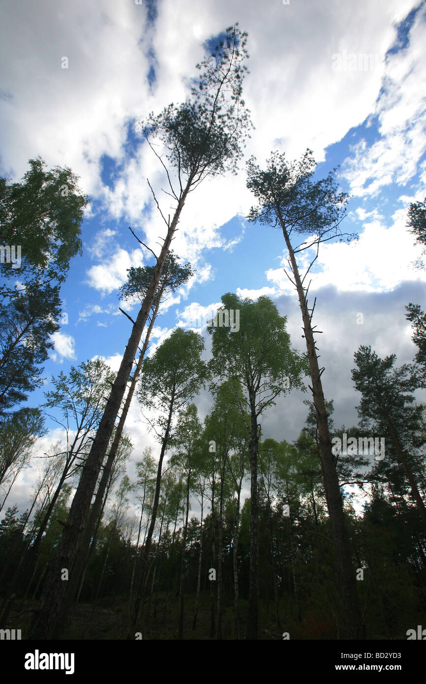 Wald auf der Insel Oksenøya in den See Vansjø, Råde Kommune, Østfold Fylke, Norwegen. Stockbild