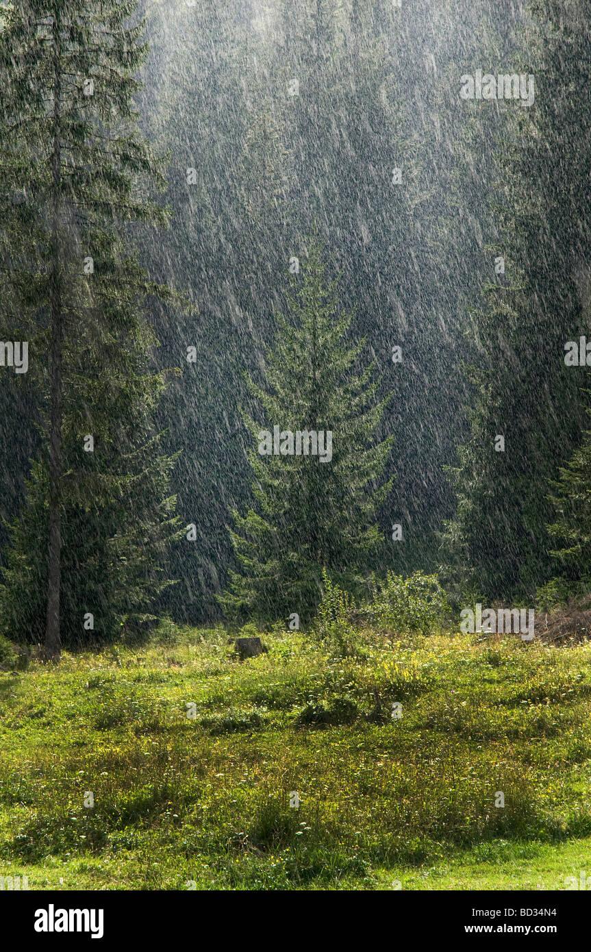 Der Regen im Wald Tarvisio Stockbild