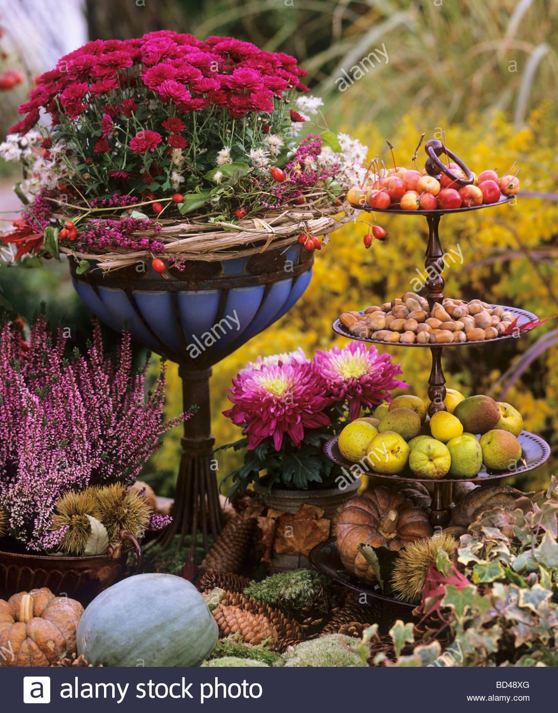 Herbst Dekoration Blumen Kurbisse Apfel Haselnusse Stockfoto