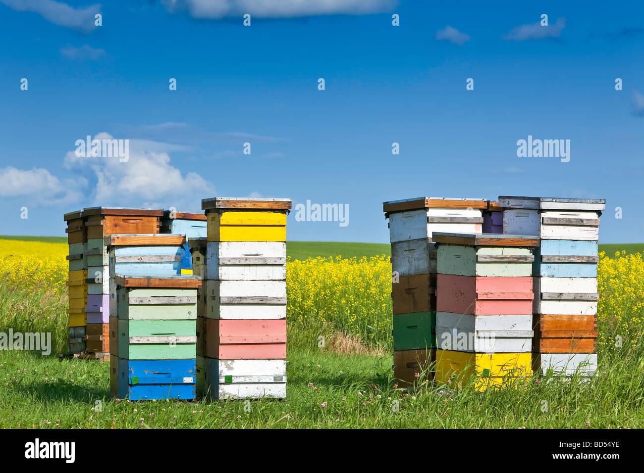 Bienenstöcke im bunten Boxen in der kanadischen Prärie, Pembina Valley, Manitoba, Kanada. Stockbild