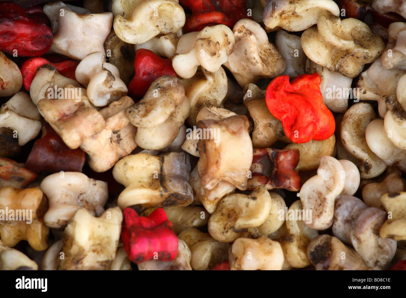 Traditionelle Knöchel Knochen verwendet für Spiele, Mongolei ...
