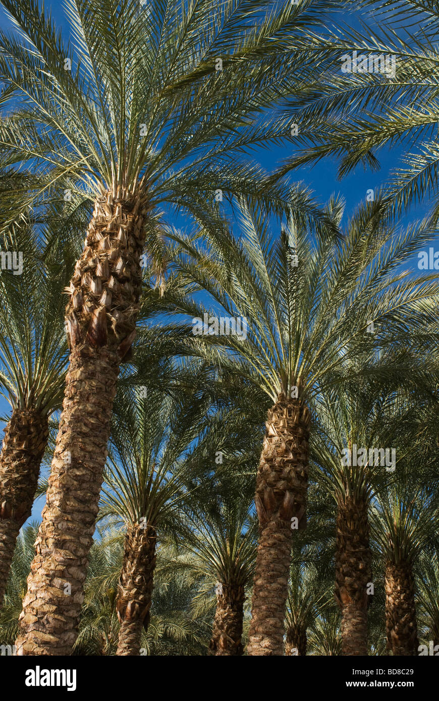 Royal Palms Indian Wells Palm Springs Southern California Stockbild