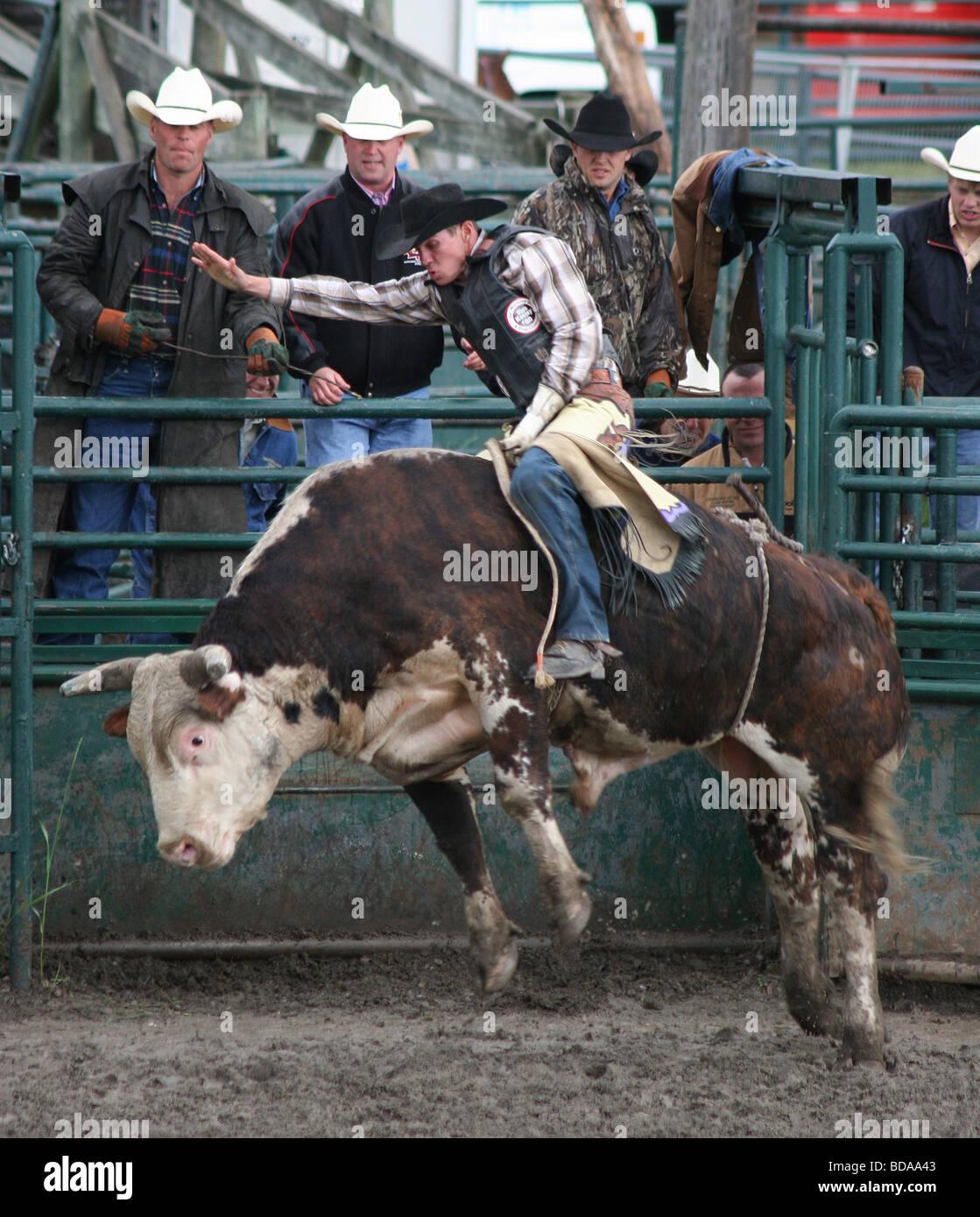 Bull-Fahrer hängen auf, um Ihr Leben bei einem kleinen Stadt Rodeo Stockbild