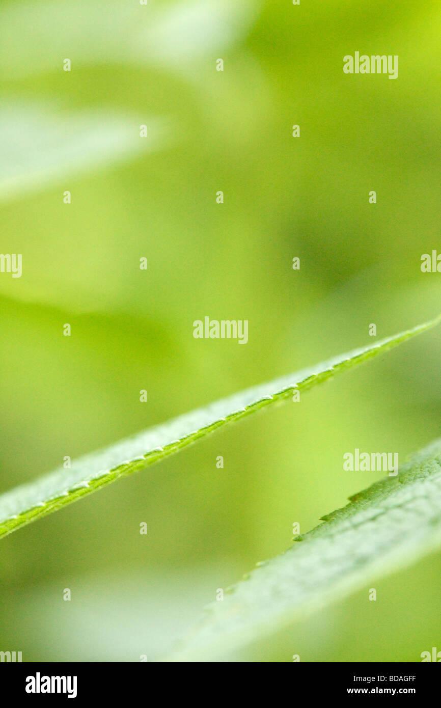 Blatt-abstrakt Stockbild