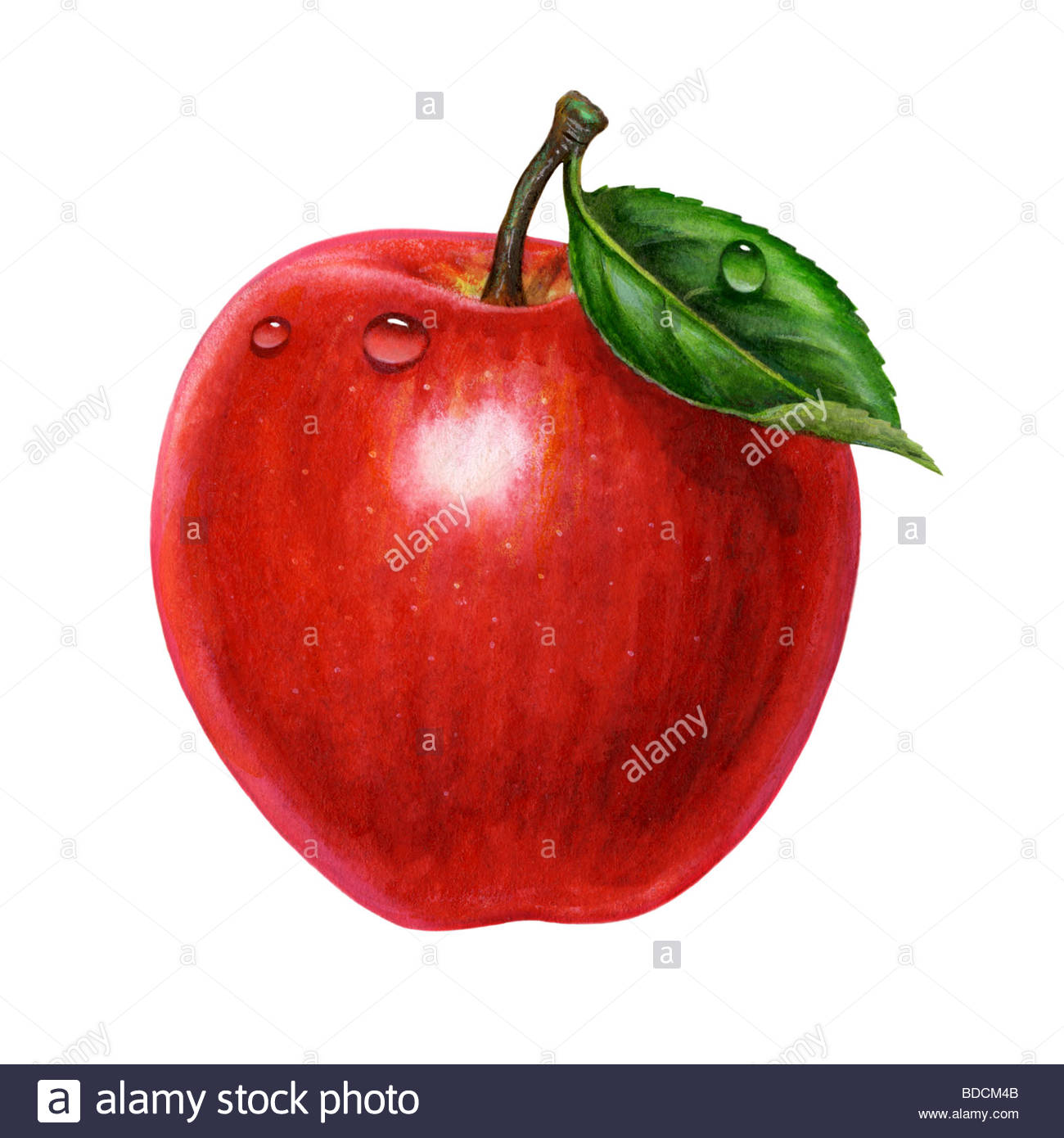 Apple und Blatt Solo Stockbild