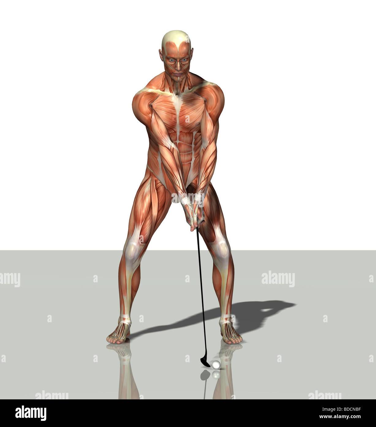 Anatomie Anatomy Stockfotos & Anatomie Anatomy Bilder - Seite 12 - Alamy