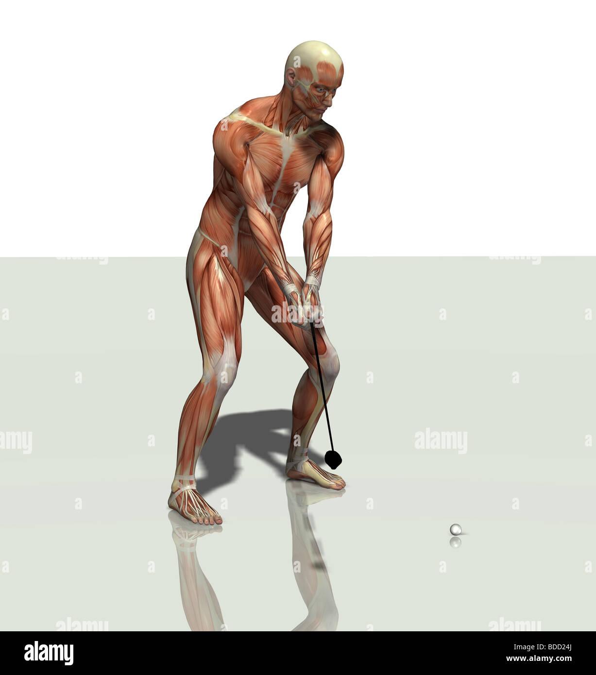Fantastisch Muskelmann Diagramm Zeitgenössisch - Menschliche ...