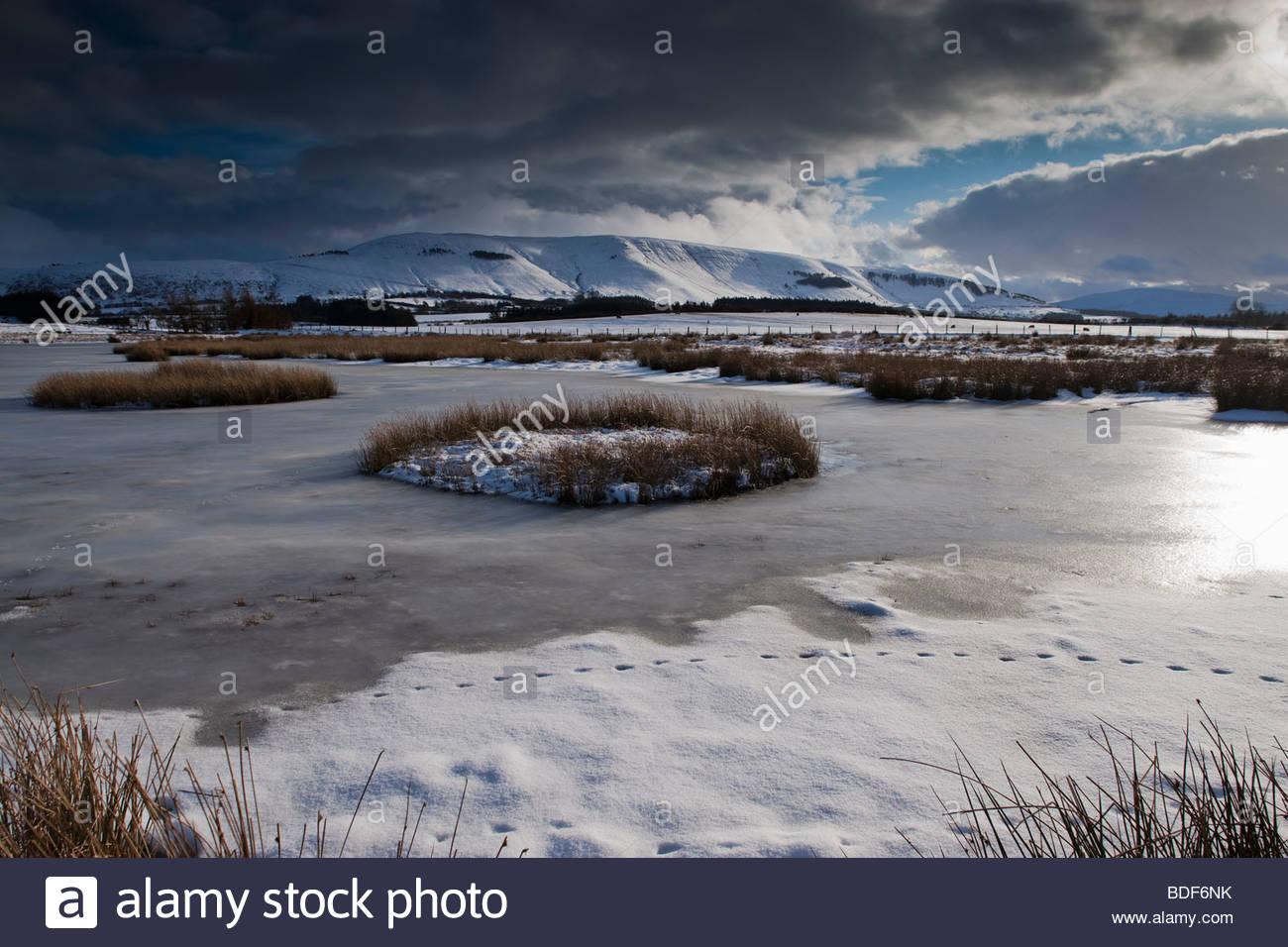 Mynydd Illtyd gemeinsamen Brecon Beacons Powys, Wales Stockbild