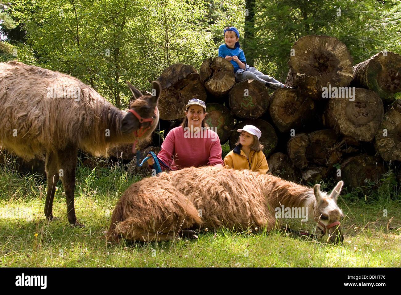 Familie Lamatrekking im Forest of Dean G Stockbild