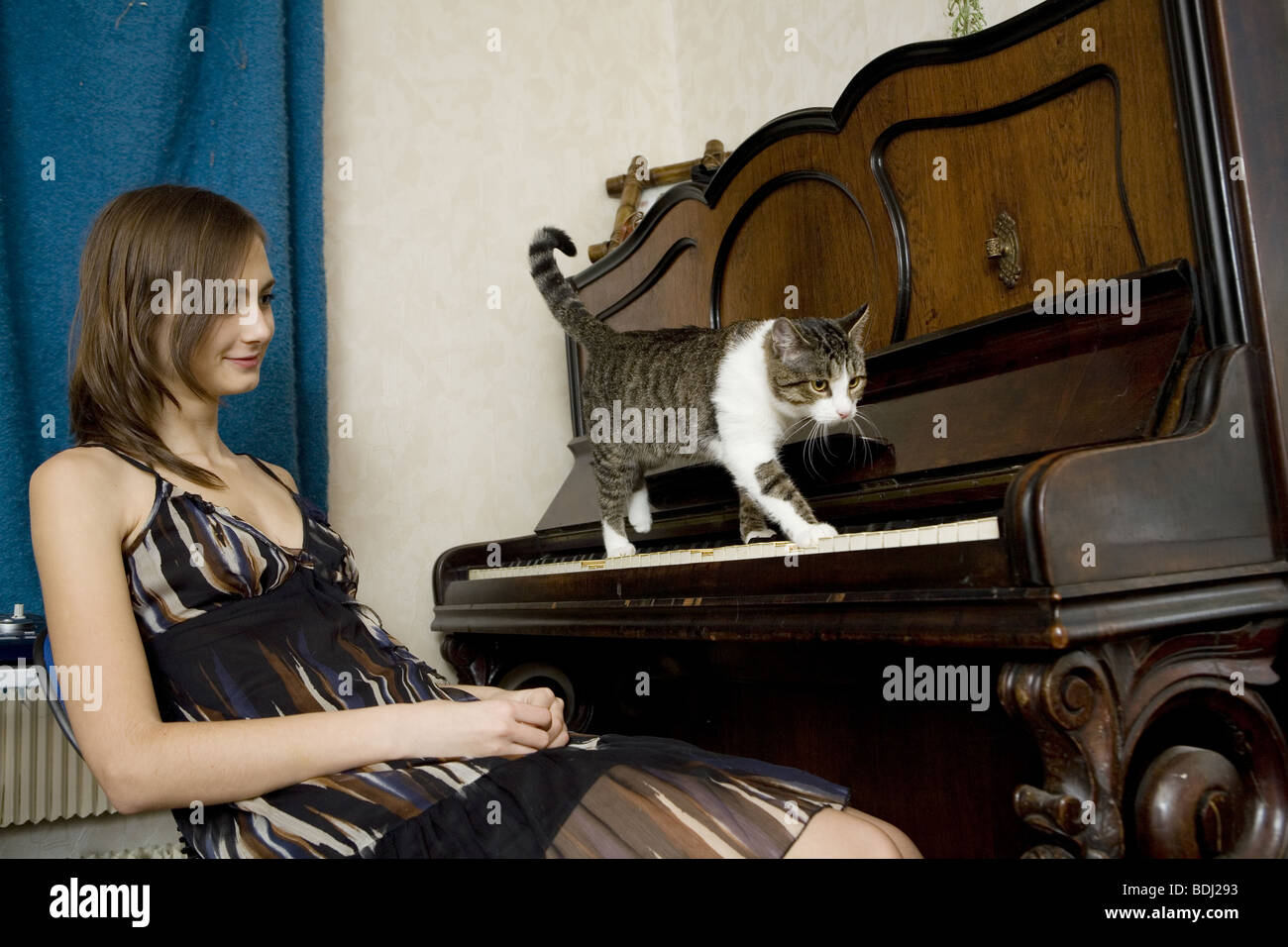 cat piano music funny stockfotos cat piano music funny bilder alamy. Black Bedroom Furniture Sets. Home Design Ideas