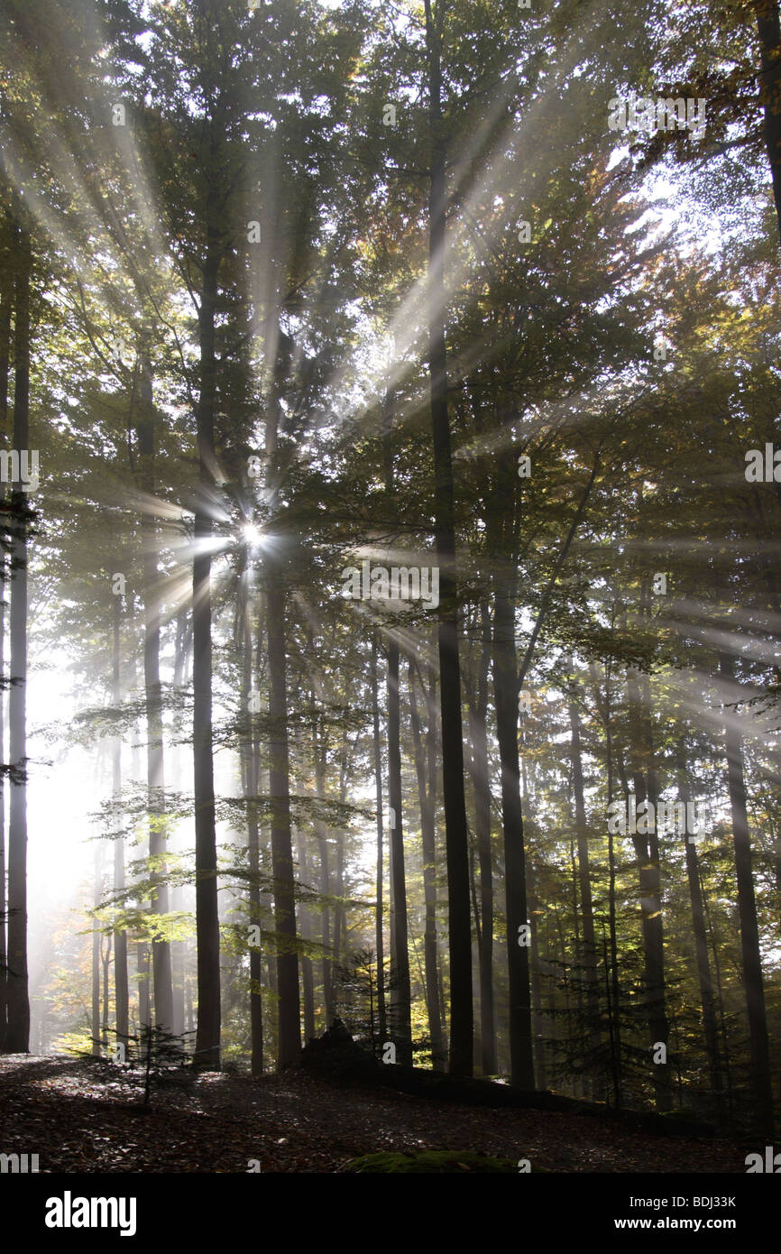 Lichtstrahlen Im Wald Lichter im Wald Stockbild