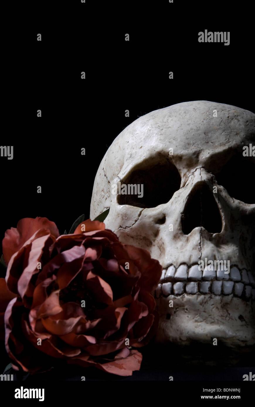 Schädel und rose Stockbild