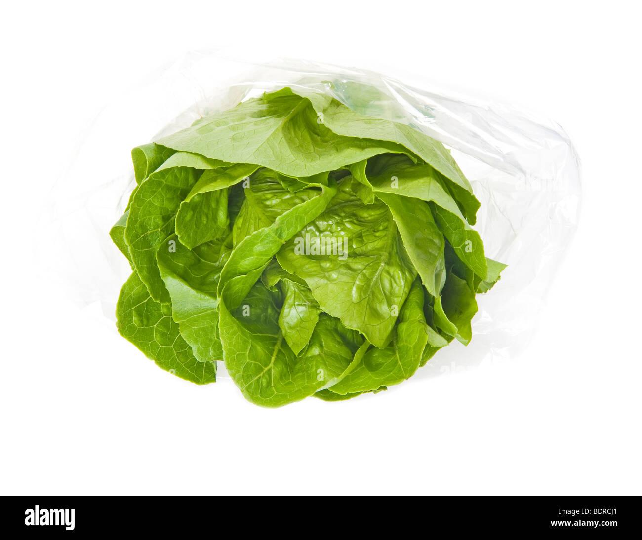 Salat Salat ROMANA grüne Greenfood mediterraner Küche verlässt Italien Italienisch italienische Fitness Stockbild
