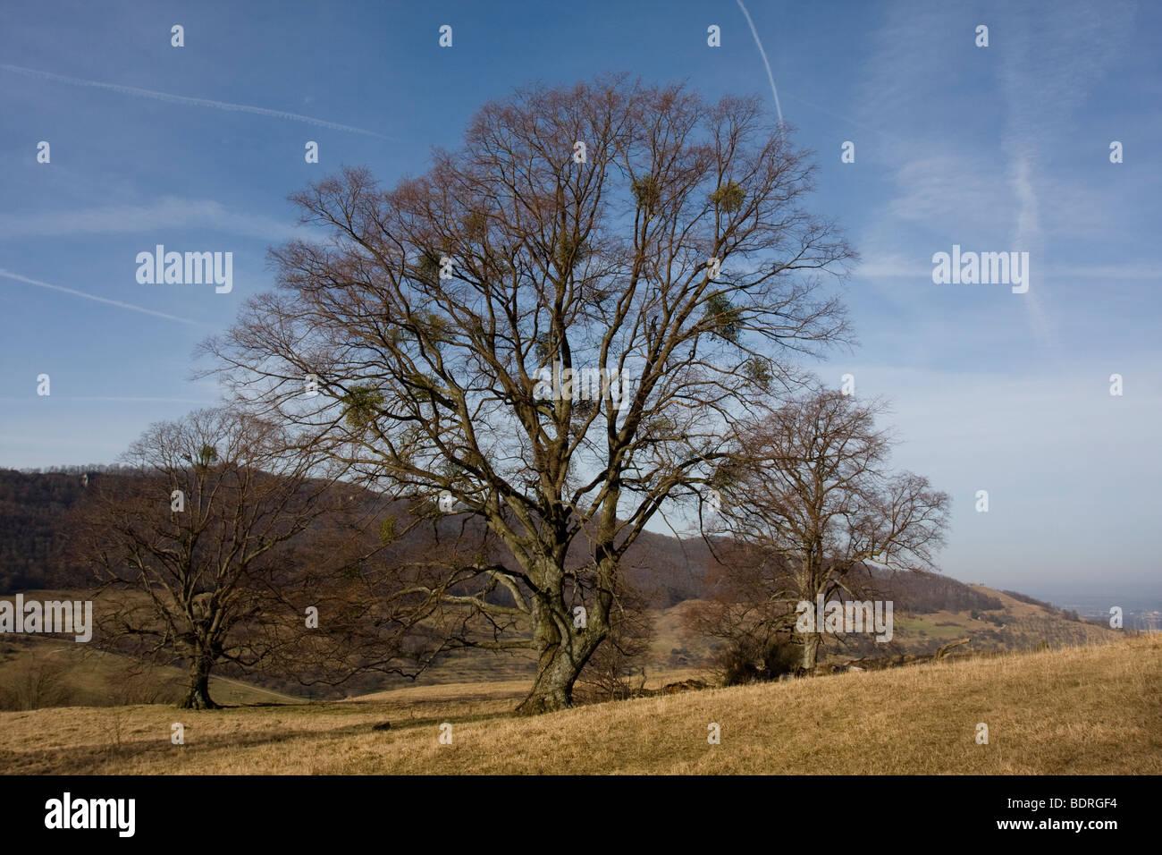 Baum, Baeume, Fruehling, Teck, sch.ools.it Alb, Deutschland, Baum, Bäume, Frühling, Deutschland Stockbild